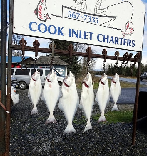 Photo of a hanging flounders