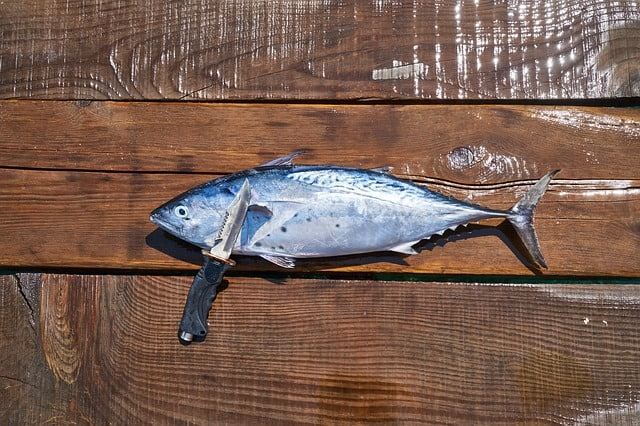 a knife leaning on a freshly caught fish